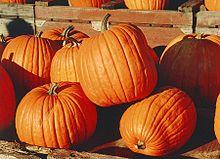 pumpkins jpg w